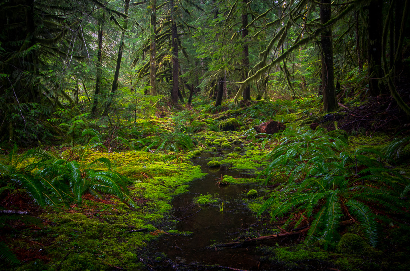 mt-hood-green-forest-bed